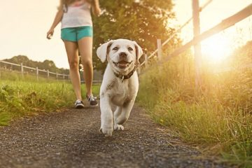 Hundekrankenversicherung mobil