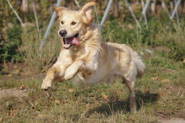 Hundehaftpflichtversicherung mobil